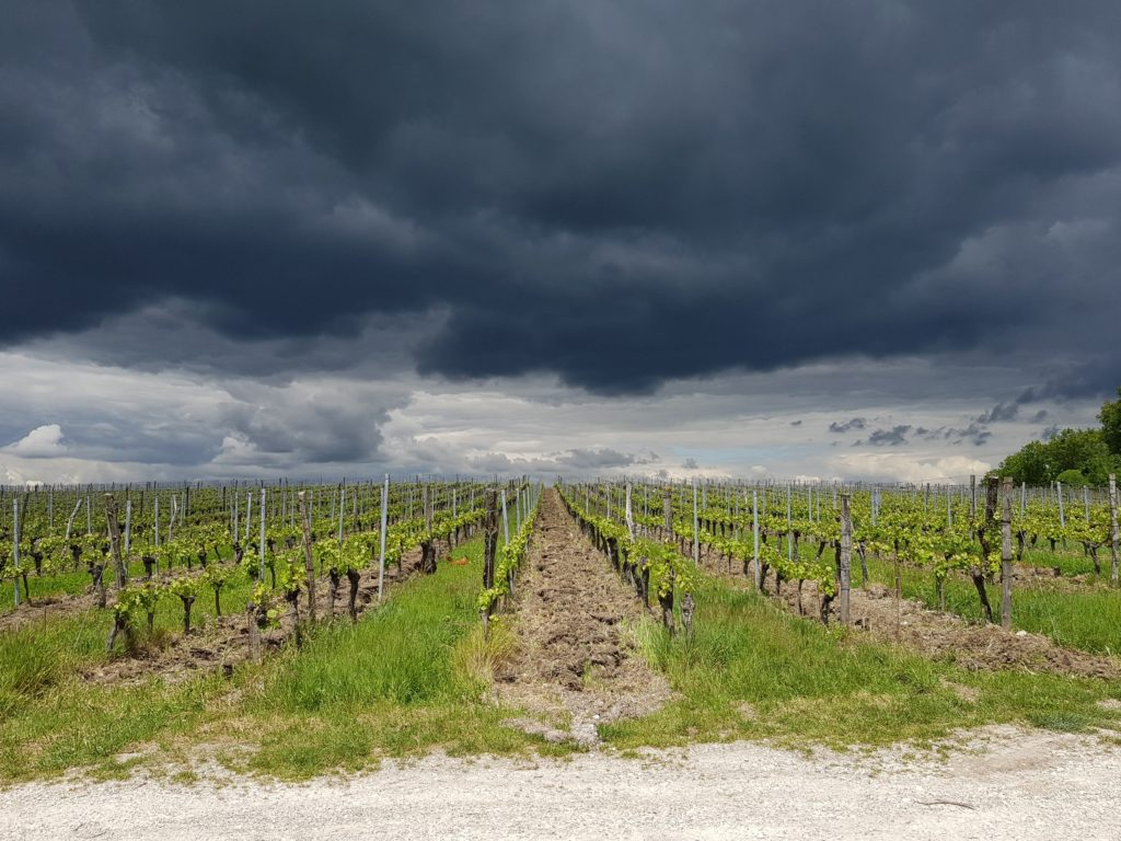 Gathering storm clouds, over the Château Tour des Gendres vineyard, Ribagnac, Dordogne, France